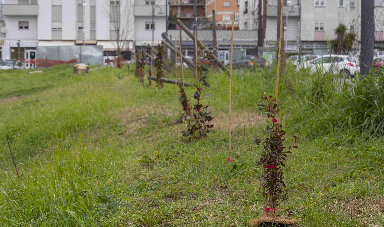 Guidonia partecipa al bando regionale: obiettivo nuovi alberi nelle scuole