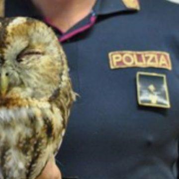 Ostia, la polizia soccorre un rapace ferito