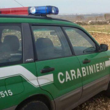Pescatori senza licenza ai Canneti di Villa Adriana: multe per più di mille euro