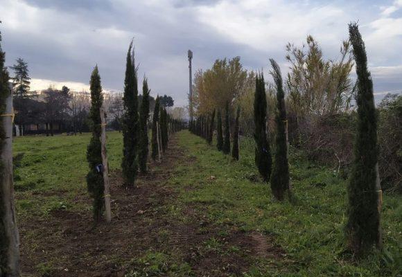 Guidonia, piantati 62 alberi a Valle Pilella