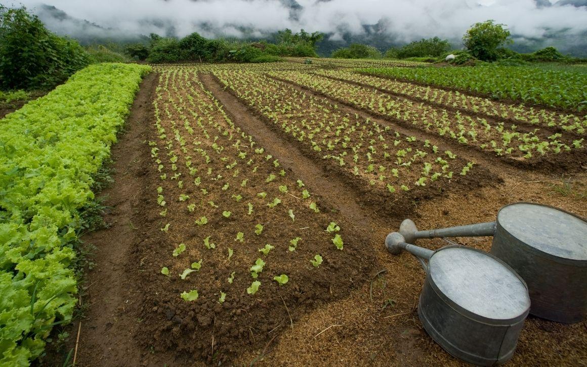 Nel Lazio cresce la quantità di coltivazione bio
