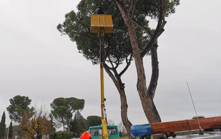 Guidonia, pericolo alberi per maltempo: oggi taglio di un pino a Villanova