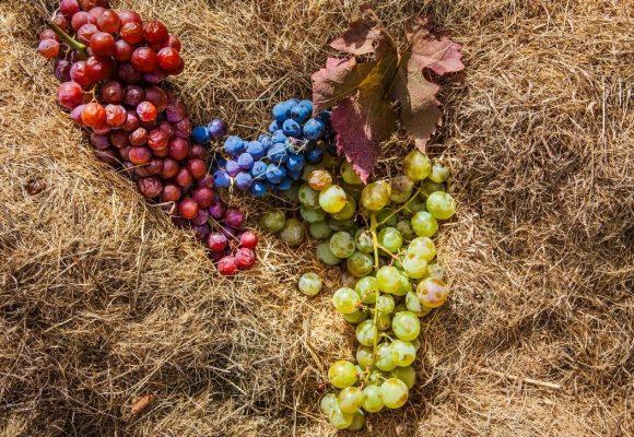 Raspato nero e Reale bianca: due vitigni laziali nel registro nazionale