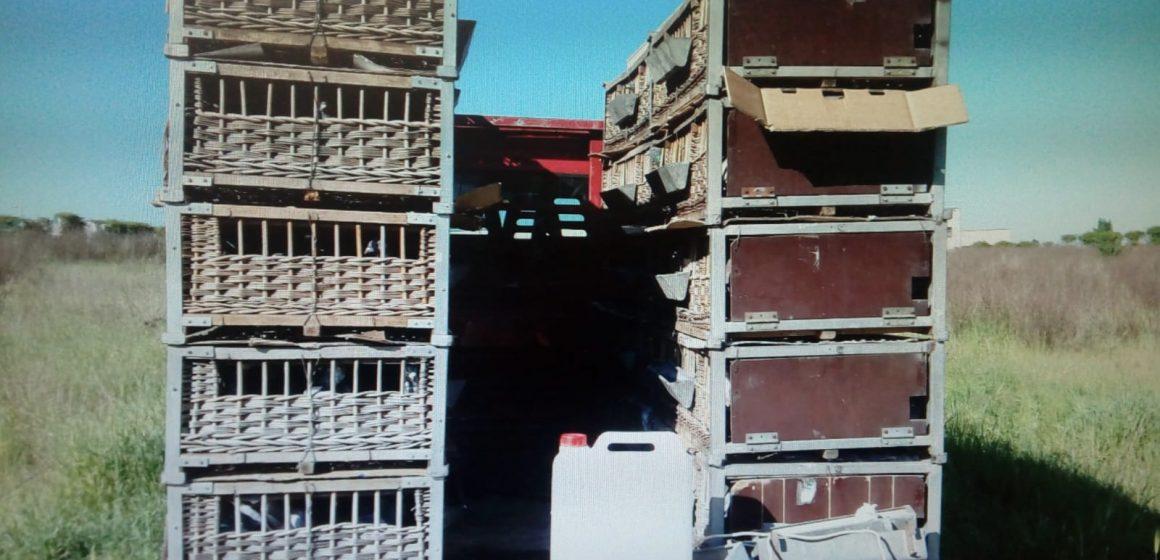 Guidonia, un carico di 500 colombi in gabbia senza autorizzazione