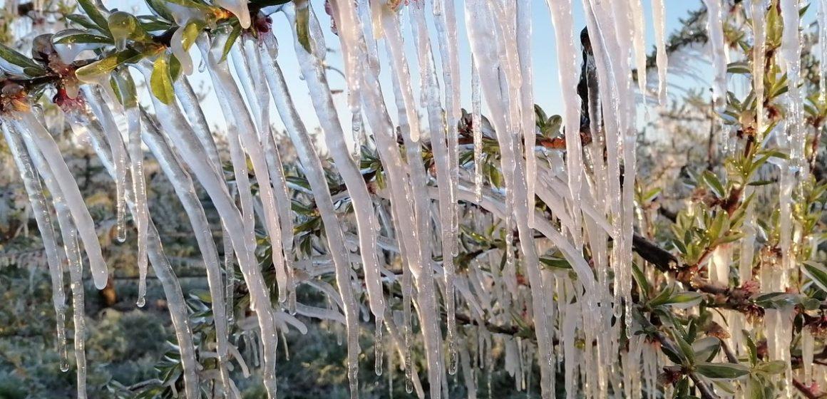 Lazio, danni per il gelo sulle coltivazioni